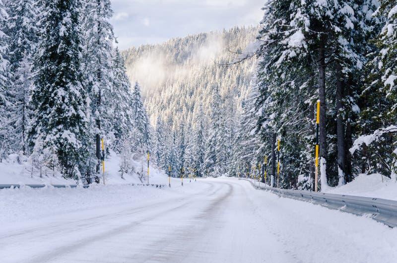 风景高山路通过森林 免版税图库摄影