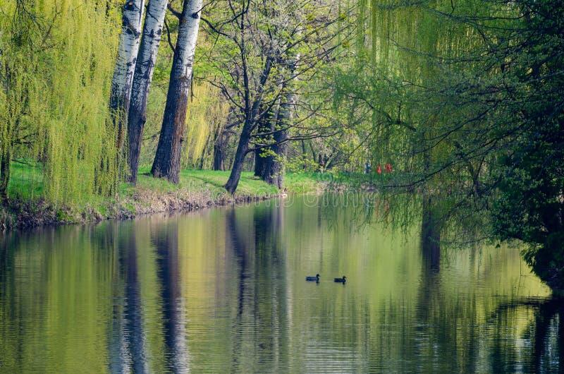 风景,在树中的湖在树木园亚历山大,乌克兰 免版税库存图片