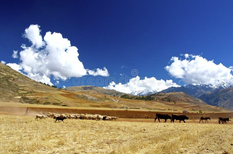 风景,驾驶了,神圣的谷,秘鲁 免版税库存照片