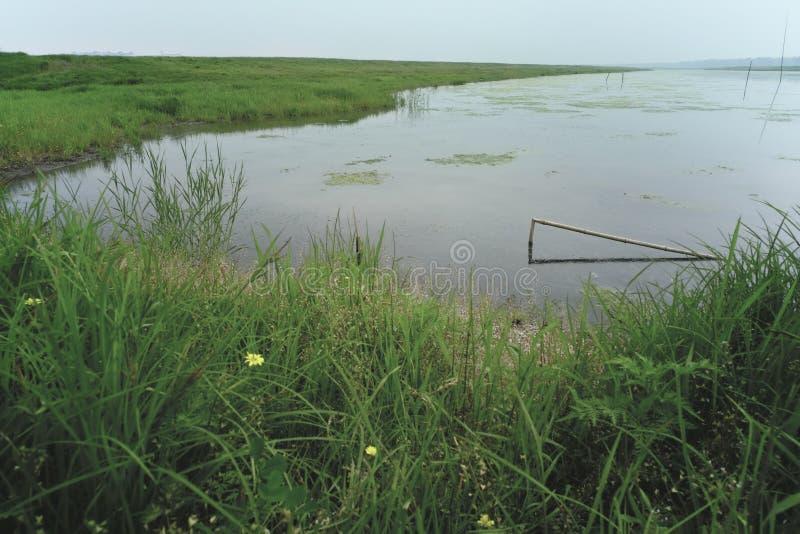 风景:有草和反射的自然牧场地池塘 免版税图库摄影