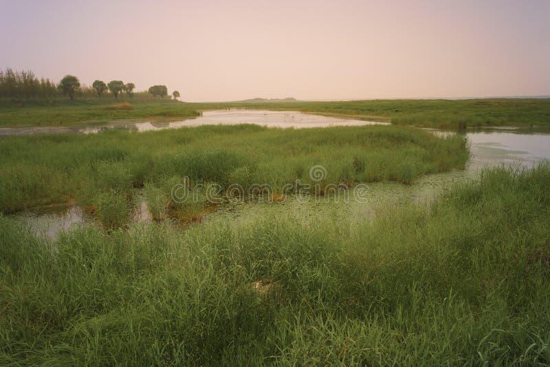 风景:黄昏的密集的牧场地池塘 库存图片