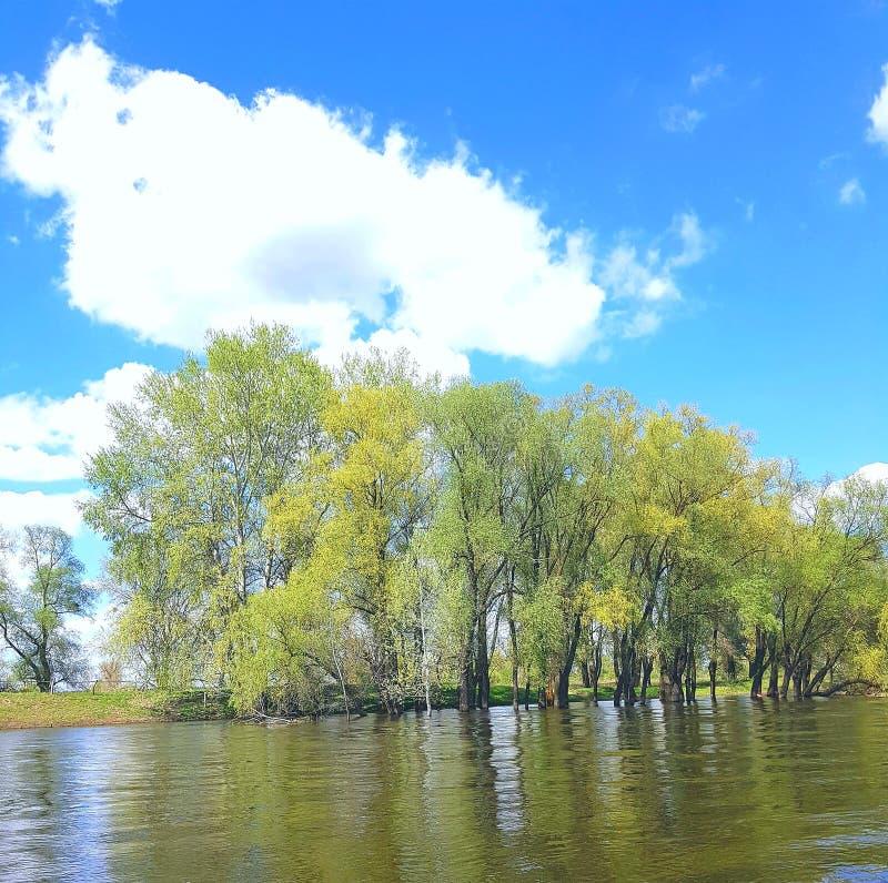 风景 从河的边您能看到位于河的河岸的绿色树 有大白色壳 免版税库存图片
