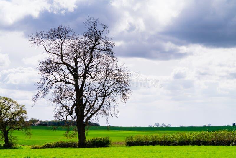 风景-树剪影在反对剧烈的多云天空背景的农村约克夏 免版税库存照片