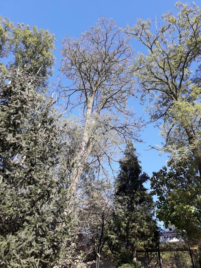 风景-树在森林里 免版税库存照片