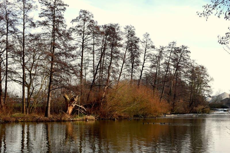 风景 河在森林里水的水源在冬天山的  冰和第一雪 免版税库存图片