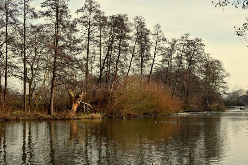 风景 河在森林里水的水源在冬天山的  冰和第一雪 库存图片