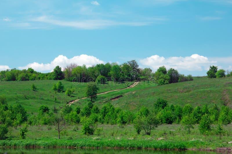 风景绿色象草的小山、谷、的树和的蓝天 库存图片
