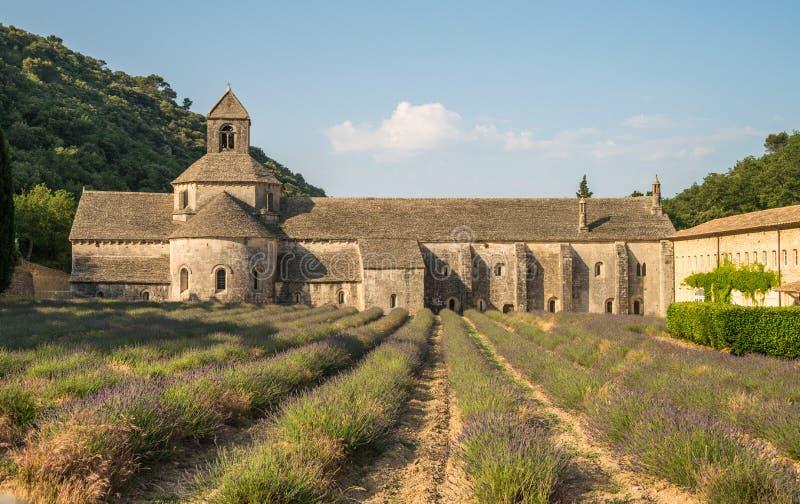 风景Senanque修道院和开花的淡紫色领域在法国的普罗旺斯地区 库存照片