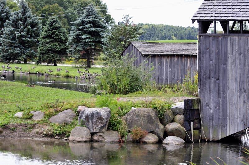 风景streamside 免版税库存图片