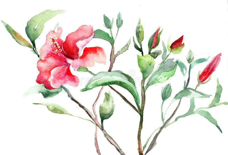 风格化锦葵属花 向量例证