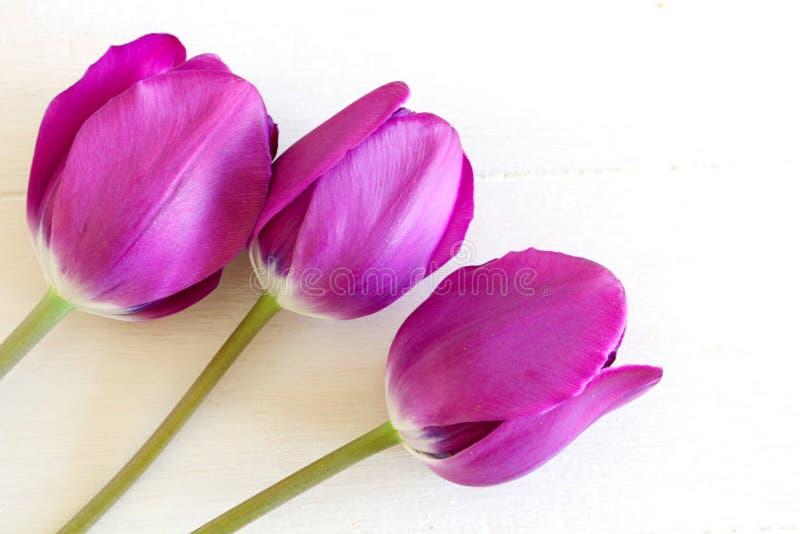 风格的库存照。春季女性景观,花卉构成,白色背景下美丽的郁金香。平铺,俯视。风格的库存照ã 免版税图库摄影