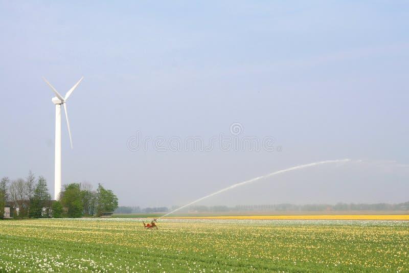 风车为灌溉郁金香领域提供能量在东北镇开拓地,荷兰 免版税库存照片
