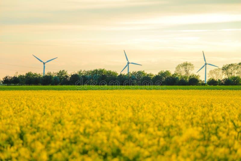 Download 风车和油菜籽领域 库存图片. 图片 包括有 问题的, 收获, 发展, 强奸, 资源, 乡下, 能承受, 恢复 - 59101469