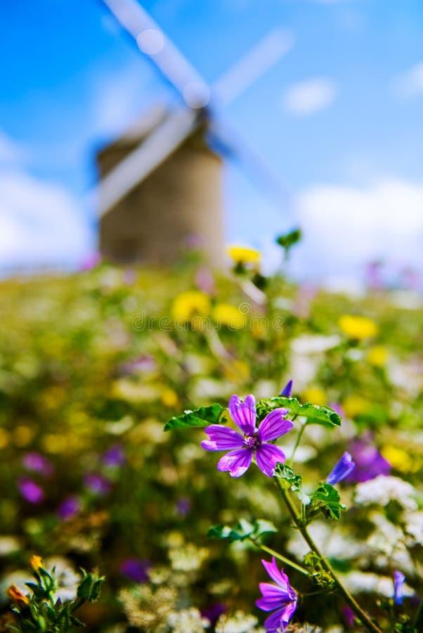 风车和花在Beauvoir在诺曼底,法国 免版税库存图片