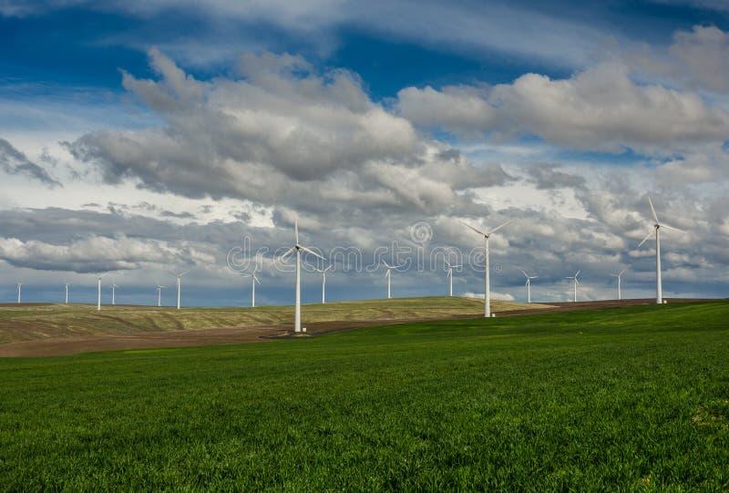 风轮机和辗压象草的领域行  免版税库存图片