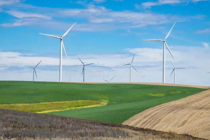 风轮机和麦田在东俄勒冈 库存照片