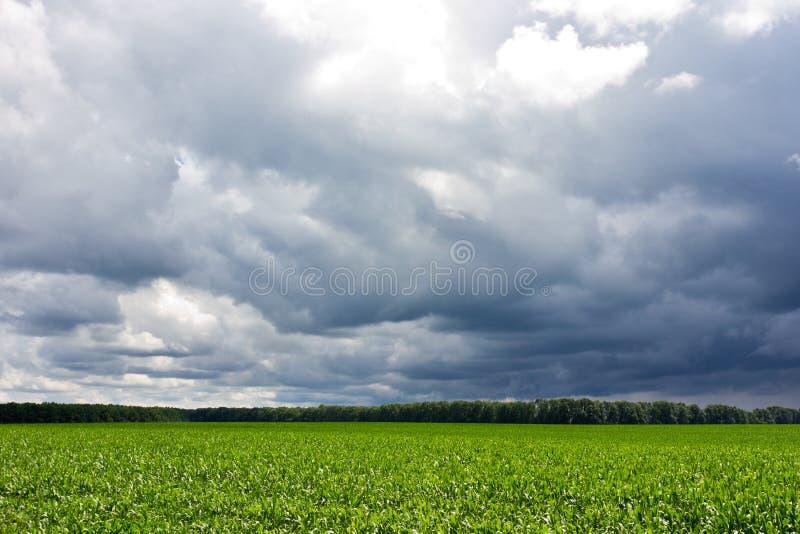 风雨如磐的天空和领域 免版税图库摄影