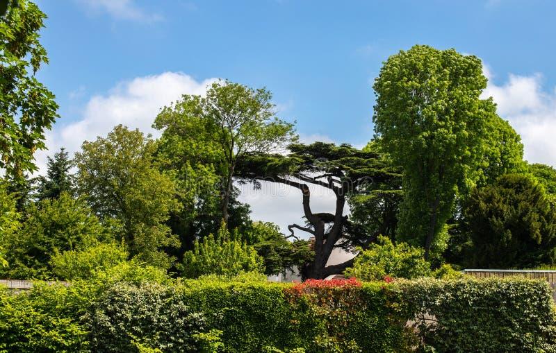 风雨如磐的绿色、许多灌木和绿色树 在一个美丽的公园的蓝色多云天空和异乎寻常的树在中心 免版税库存照片