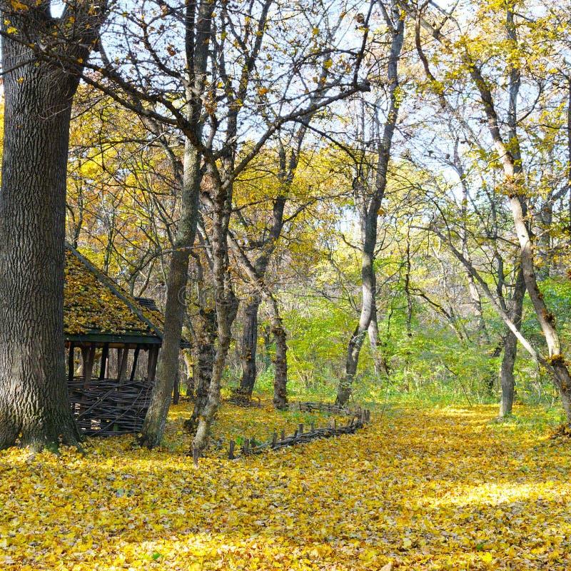 风雨棚在美丽的秋天森林里 图库摄影