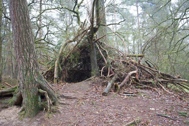 风雨棚由木头制成在森林里 库存照片