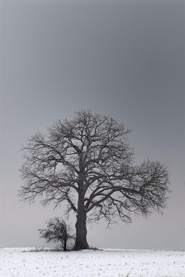 风雨棚的结构树 免版税库存照片