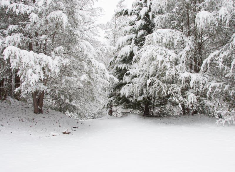 暴风雪在Chattahoochee国家森林里 免版税库存图片