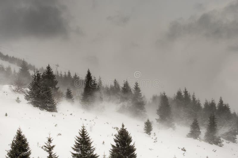 暴风雪 库存图片