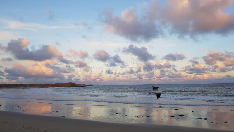 飞利浦海岛澳大利亚 免版税库存图片