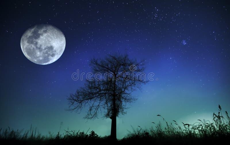 飞星和树在月光在晚上,美好,与蓝色光 免版税图库摄影