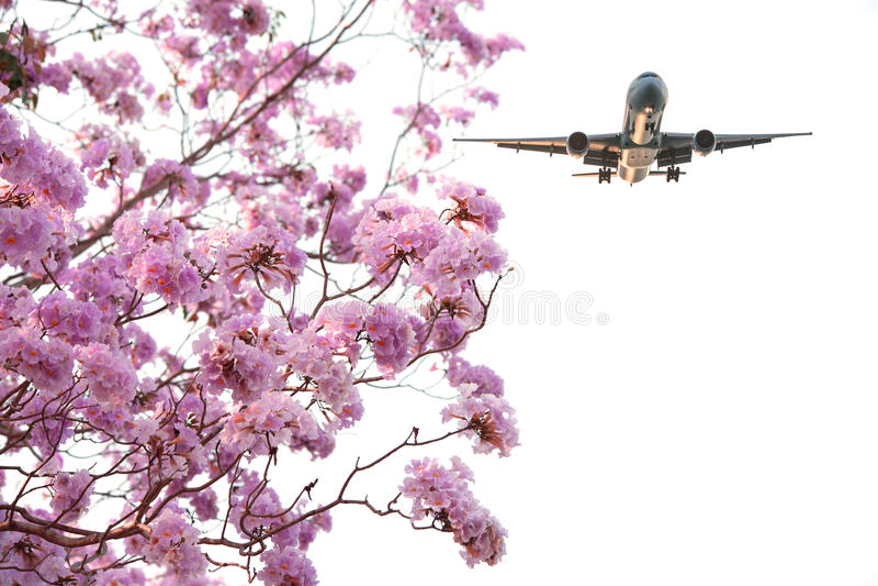 飞机有桃红色花视图 库存图片