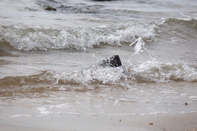 飞溅在岩石的波浪 库存照片