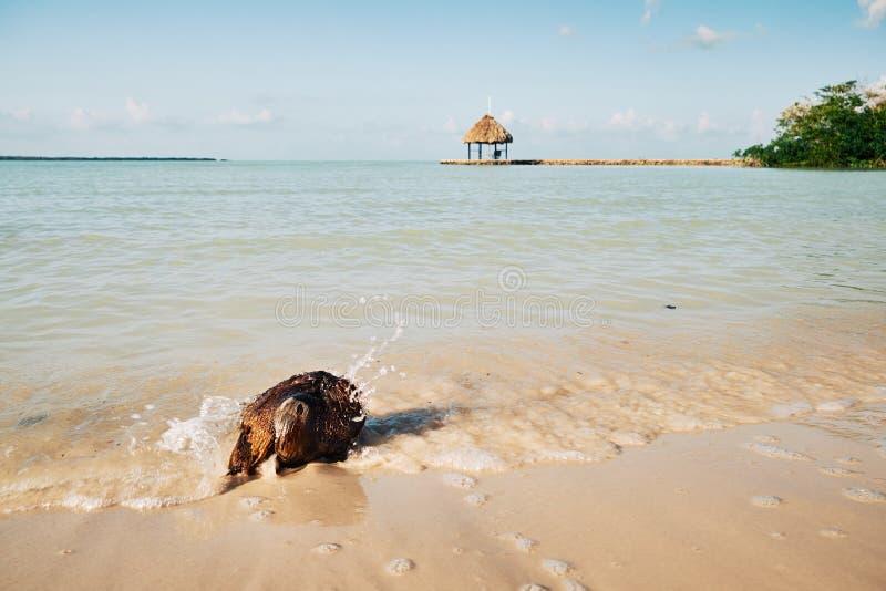 飞溅在椰子附近的波浪 库存图片