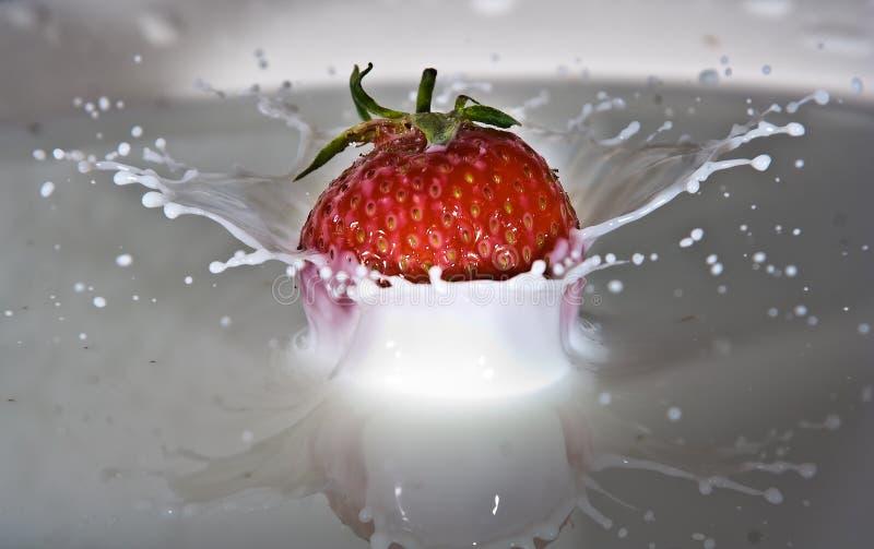 飞溅在牛奶的草莓 免版税库存照片