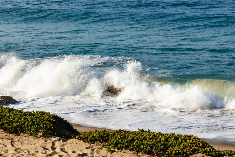 飞溅波浪在回流和沙滩,与iceplant和,沙子 库存照片
