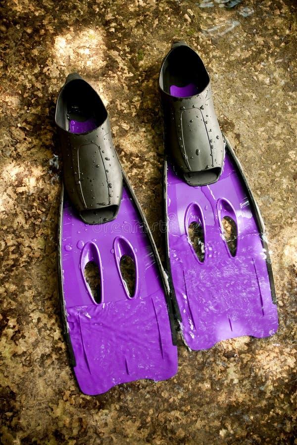 飞翅紫色游泳 库存照片