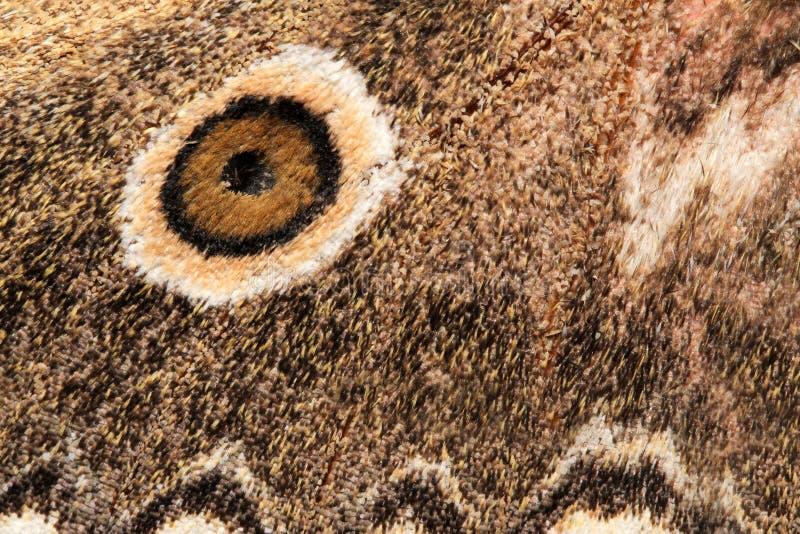 飞蛾的翼 库存照片