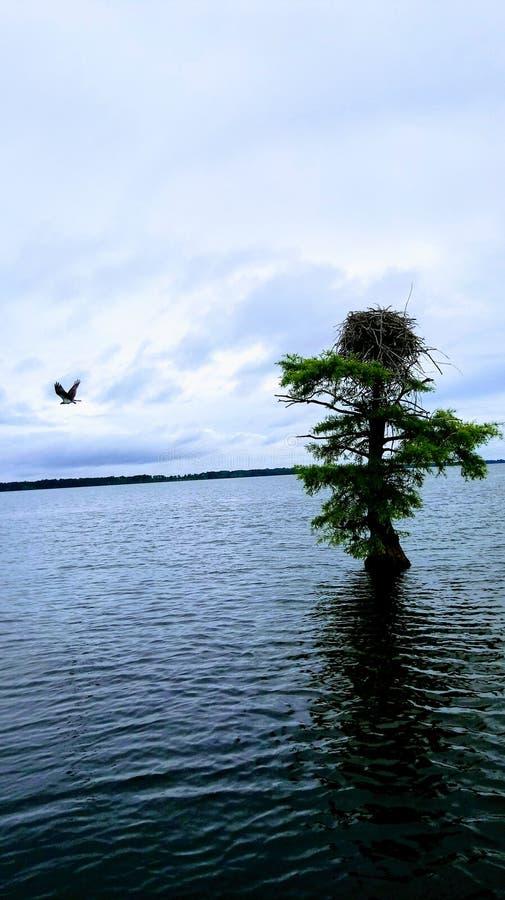 飞行到她的巢的母亲鸟 图库摄影