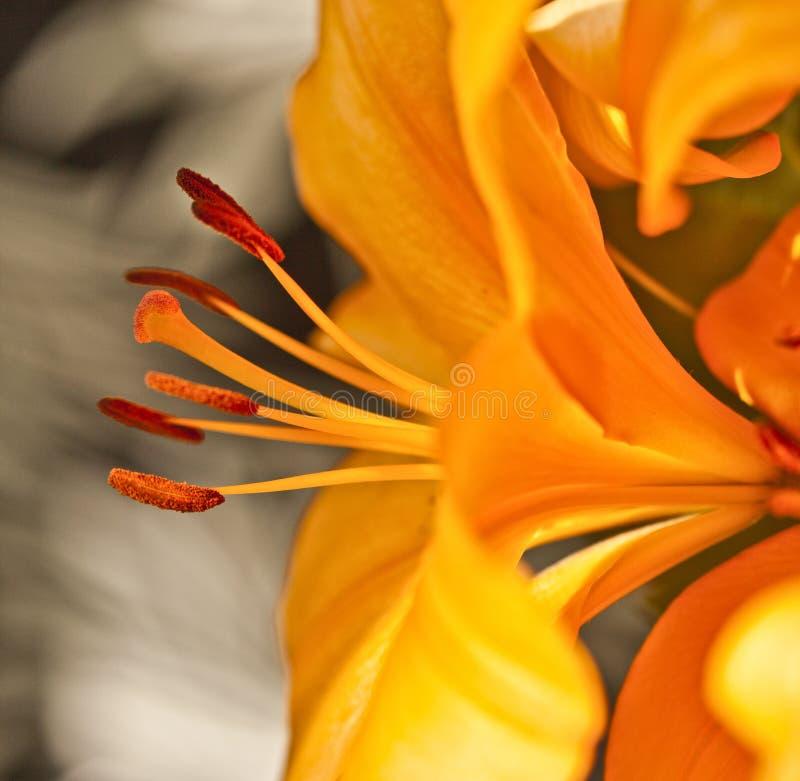 飞行动力学的流lillies 图库摄影
