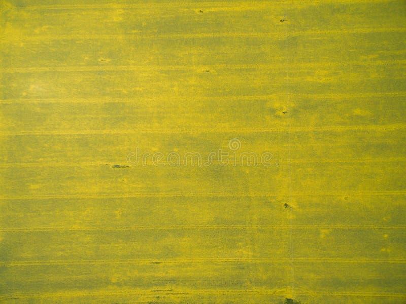 Download 飞行在与寄生虫的油菜籽领域 Landsacape 库存照片. 图片 包括有 寄生虫, 开花的, 农场, 油菜籽 - 72352968