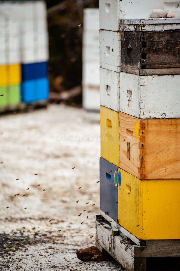 飞行在五颜六色的蜂箱附近的蜂生产蜂蜜 免版税库存图片