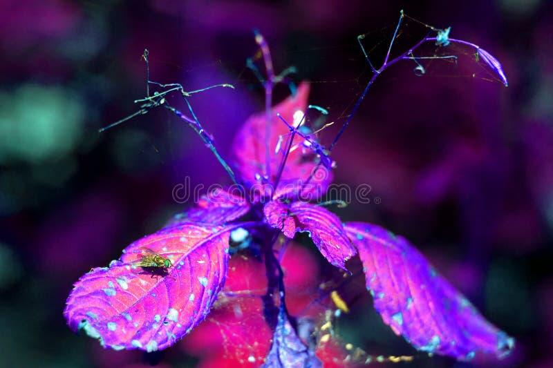 飞行在叶子在植物的森林Spiderweb里并且烘干叶子同一棵植物 在照片的不正确颜色:紫色和蓝色创造性 库存图片