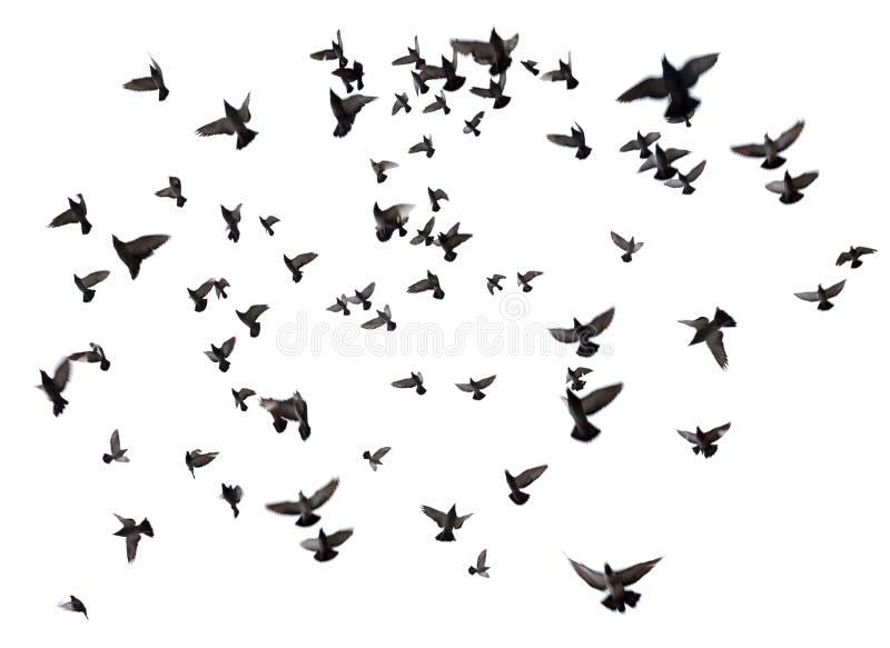 飞行在天空的许多鸟 库存照片