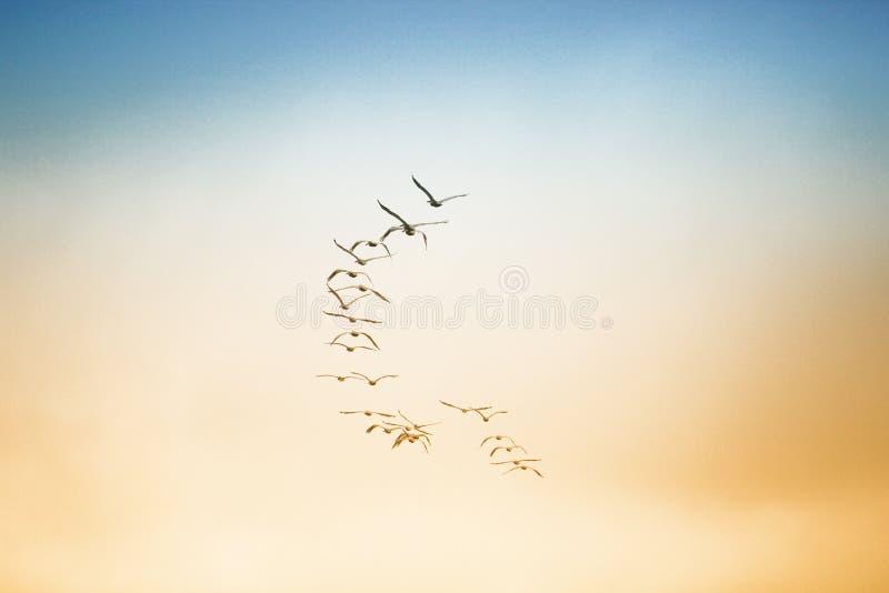 飞行在天空的鸟群  免版税库存照片