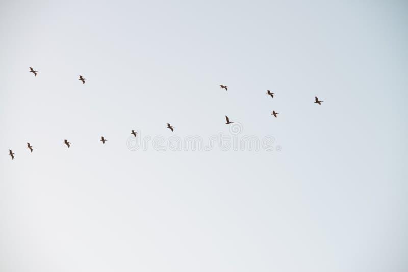 飞行在天空的鸟群  copyscape 免版税库存照片