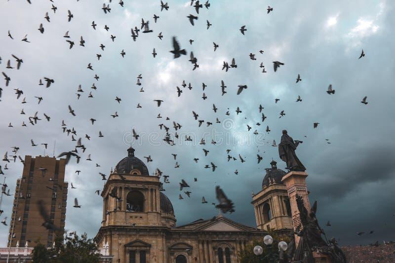 飞行在广场牟利罗上的鸽子在玻利维亚 免版税图库摄影