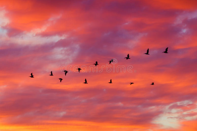 飞行在形成的鸟在日落 免版税库存照片
