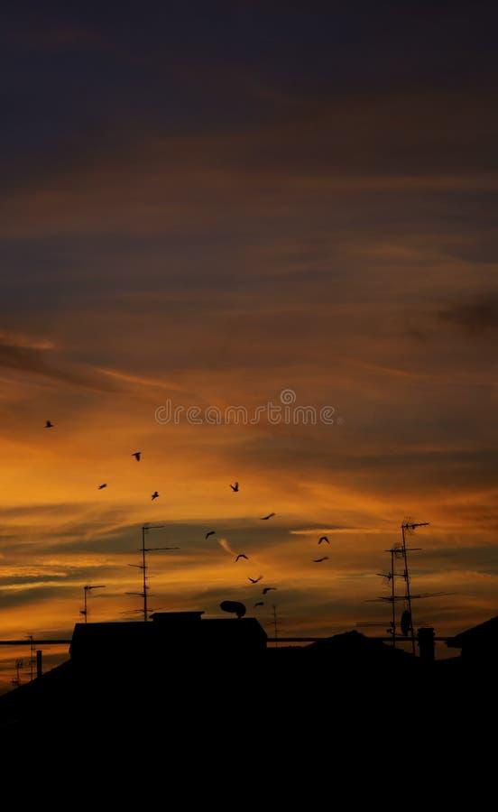 飞行在日落的鸟 免版税图库摄影