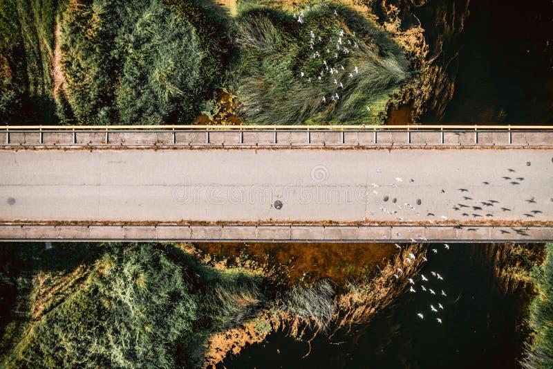 飞行在桥梁上的顶视图鸟 空中阿尔卑斯沿岸航行海岛新的照片南南西方西兰 图库摄影