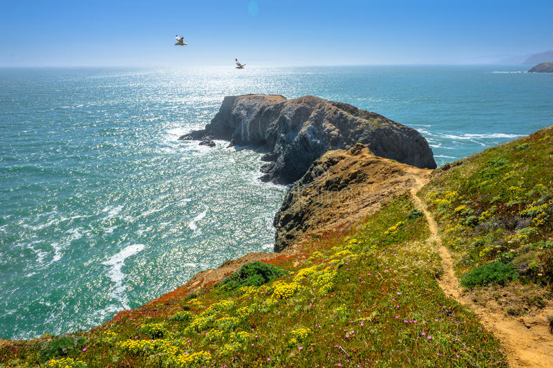 飞行在海洋和峭壁之上的鸟 免版税图库摄影