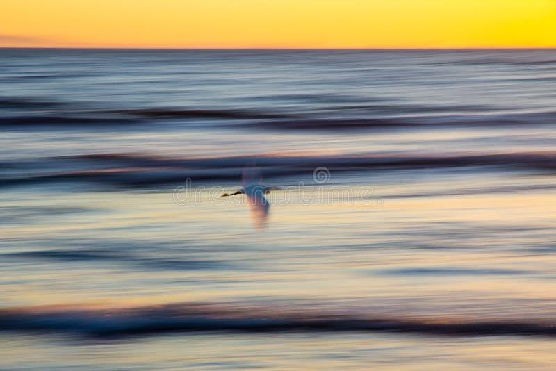 飞行在海洋的海鸟抽象摇摄在日落 库存图片